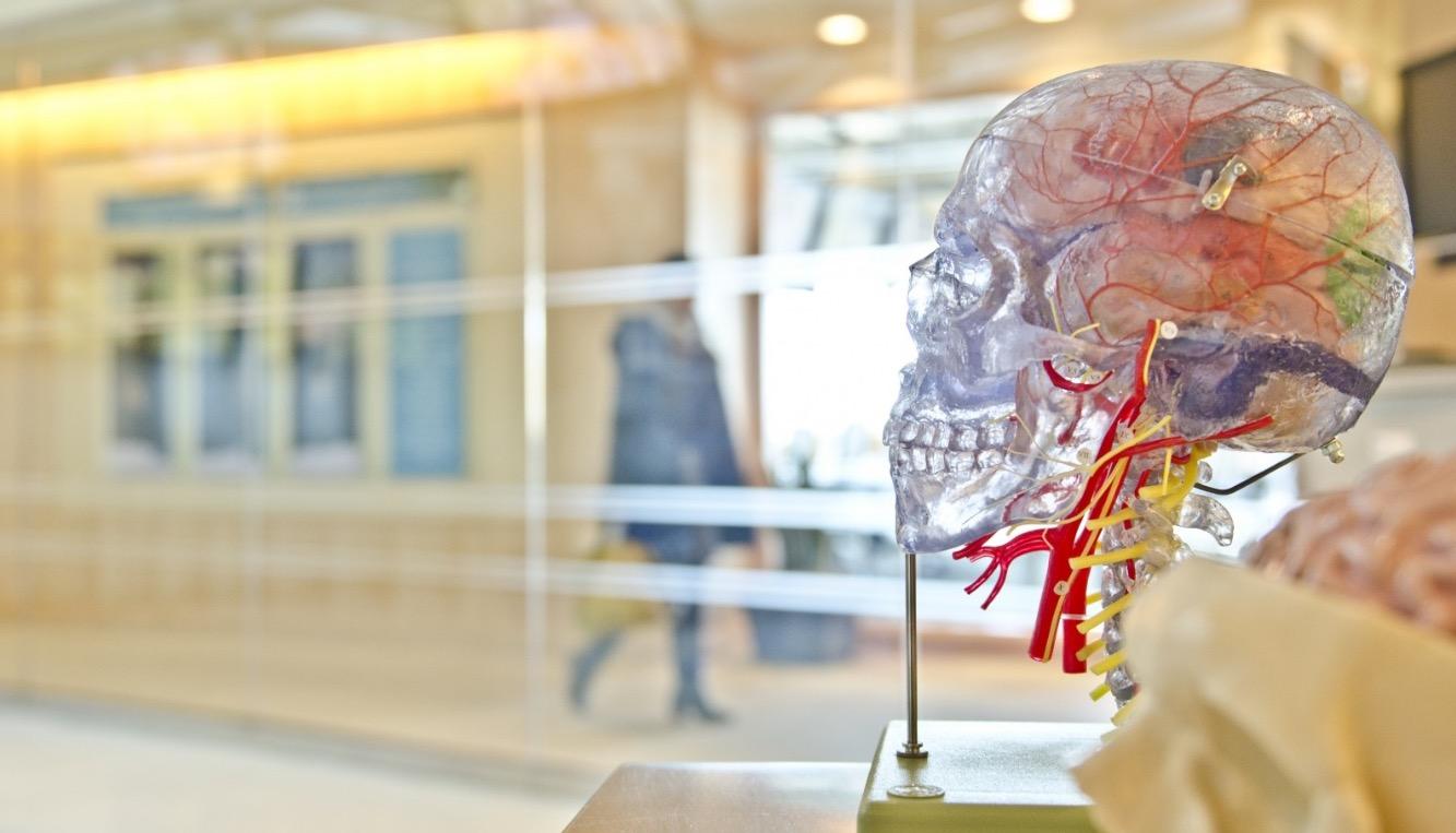 anatomia-estress